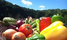 明日30日は野菜を使用したジェラートなどの販売会を行います(^^♪